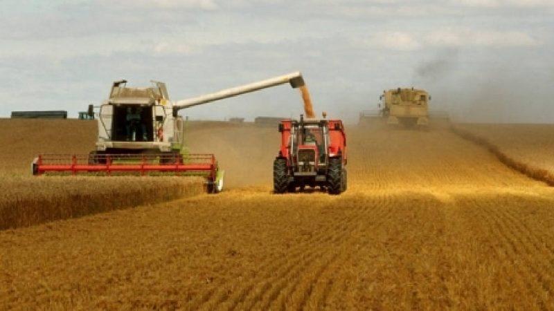 الإنتاج النهائي من الحبوب برسم الموسم 2019-2020 يبلغ 32 مليون قنطار