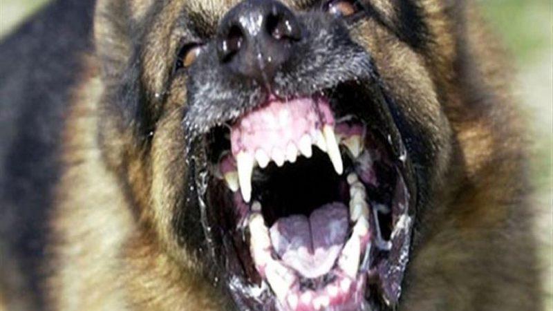 عضة كلب مسعور تهدد حياة خمسني في مولاي براهيم