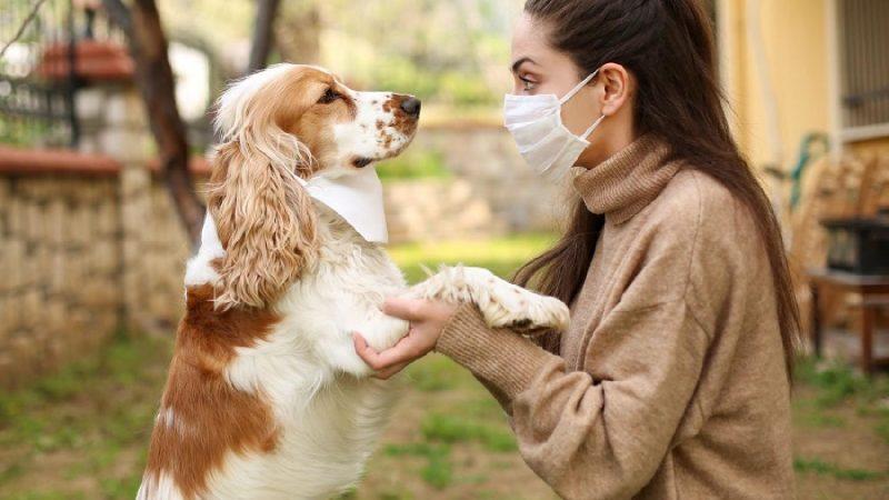 الكلاب أم القطط.. ما الحيوان الذي ينقل كورونا إلى الإنسان؟