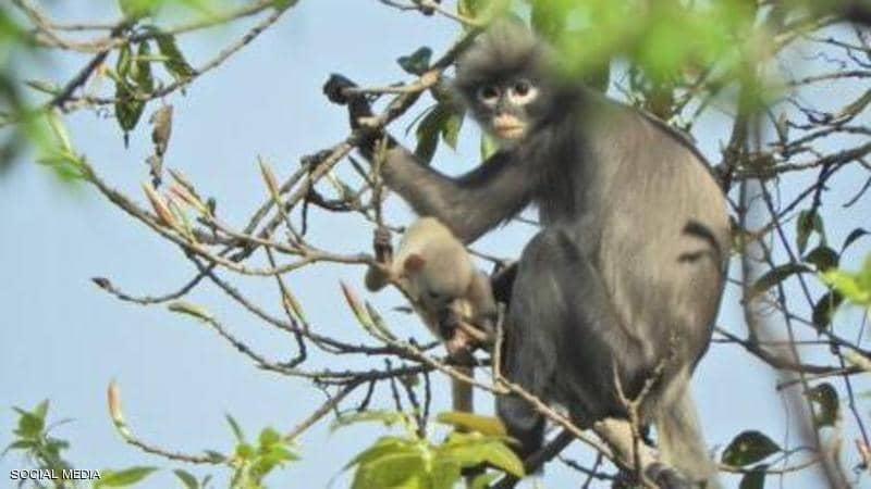 العلماء يكتشفون نوعا جديدا من القردة