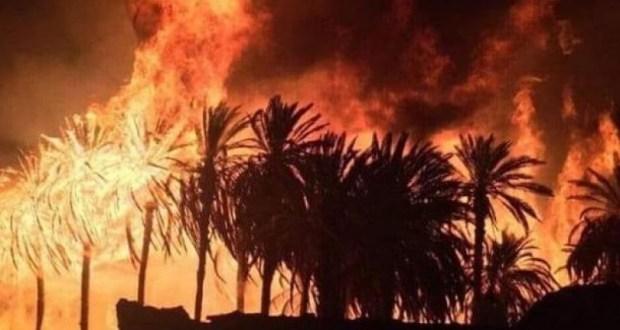 حريق مهول يأتي على أعداد كبيرة من النخيل