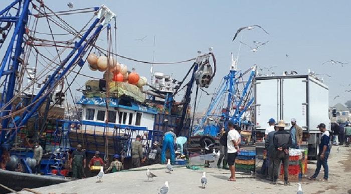 الكميات المصطادة من منتوجات الصيد الساحلي والتقليدي بميناء الصويرة تتجاوز 12 ألف طن
