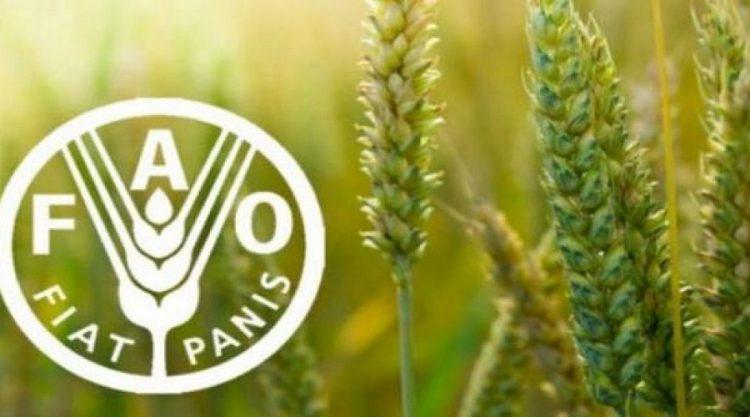 انتخاب المغرب عضوا في مجلس إدارة برنامج الأغذية العالمي