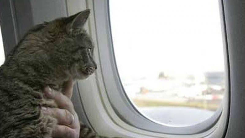 الحيوانات الأليفة لن تسلم من البريكست.. ستفقد جوازات سفرها