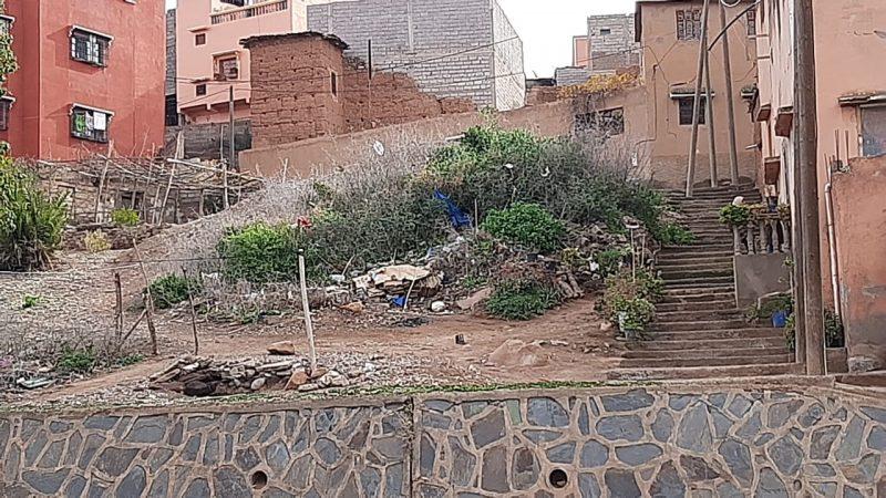 مطالب برفع ضرر نبات شوكي وسط حي بمدينة تحناوت