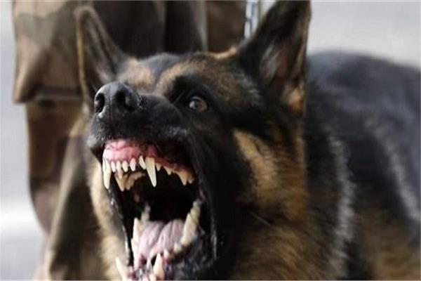 كلب مسعور يرسل عدد من الأشخاص الى مكتب حفظ الصحة بتحناوت