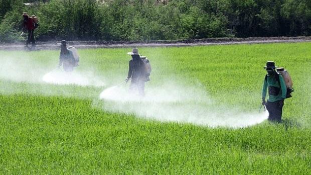 دراسة تكشف العلاقة الخطيرة بين المبيدات الحشرية وسرطان الدم