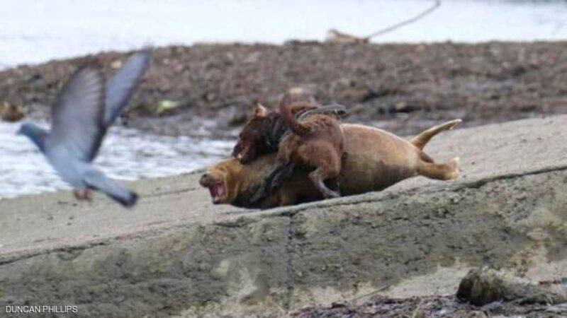 كلبٌ شرس يقتل فقمة.. والشرطة البريطانية تفتح تحقيقا