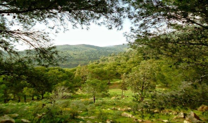 المياه والغابات بالحوز تواصل جهودها الكبيرة لحماية الموروث الغابوي