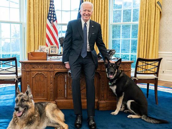 طرد كلاب بايدن من البيت الأبيض