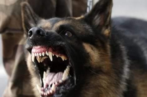 تعليمات صارمة تمنع حيازة ومرافقة وترويض واستعمال الكلاب الشرسة