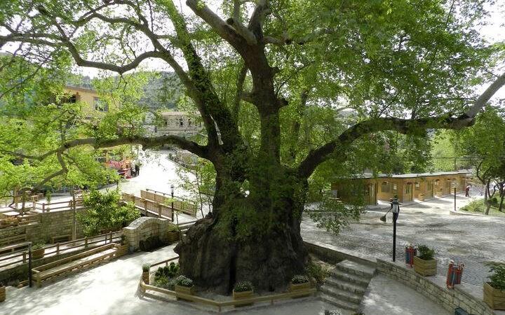 منها ما زُرع بأيدي الأنبياء،  تعرف على أقدم 10 أشجار في الكوكب