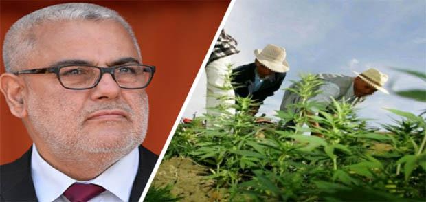 رئيس فريق الاستقلال يتهم بنكيران بتأجيل مصادقة الحكومة على قانون تقنين زراعة الكيف