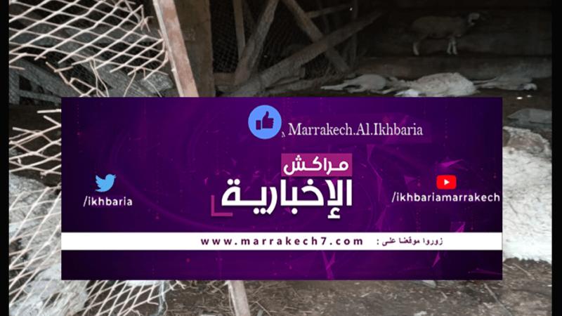 الكلاب الضالة تقتل 23 رأس من ماشية مواطن بجماعة سيدي عبدالله غيات