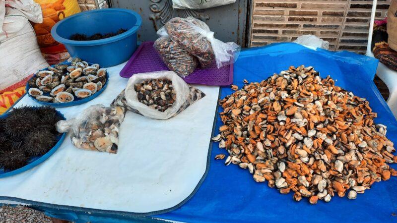 محار البحر كنزحقيقي يعزز التنوع الحيوي ويحرس البيئة البحرية لمدينة سيدي إفني