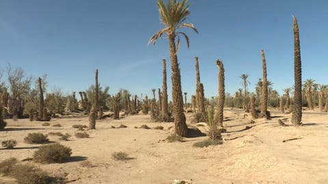 اٍعلان طاطا منطقة متضررة من الجفاف وجهود لانقاذ الساكنة من شبح العطش