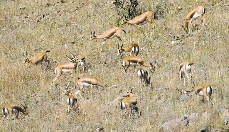 محمية الجبيلات.. فضاء طبيعي لحماية الغزال المحلي من الانقراض