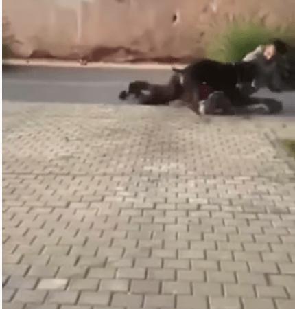 ترويض كلاب شرسة في حديقة عمومية بمراكش يثير استياء المواطنين