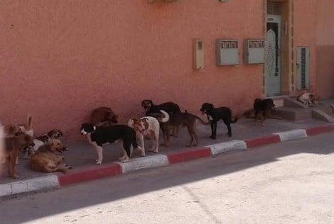 الكلاب الضالة تغزو أزقة جنان العافية و دروب باب احمر
