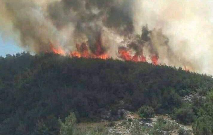 الحوز..حريق مهول يأتي على غابات غجدامة