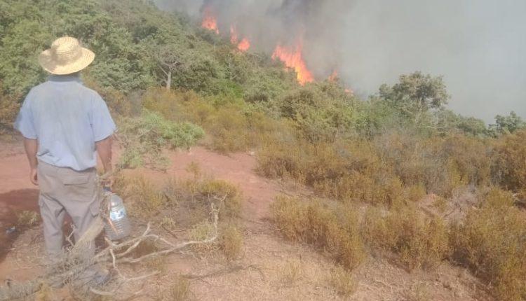 مرة أخرى..السيطرة على حريق اٍندلع في غابة بستي فاطمة